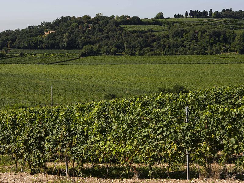 La tabellatura delle vigne a Monte del Frà