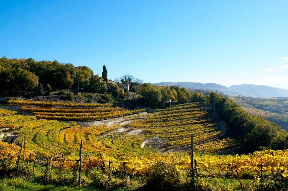Amarone-della-Valpolicella-2016-A-first-look-Consorzio-Valpolicella-image
